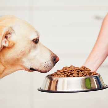 feeding-the-hungry-dog-PY6VCRY-scaled-350x350 Front Page